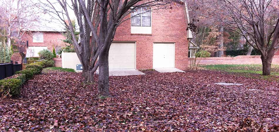 This new customer's property in Murray is heavily leaf littered.